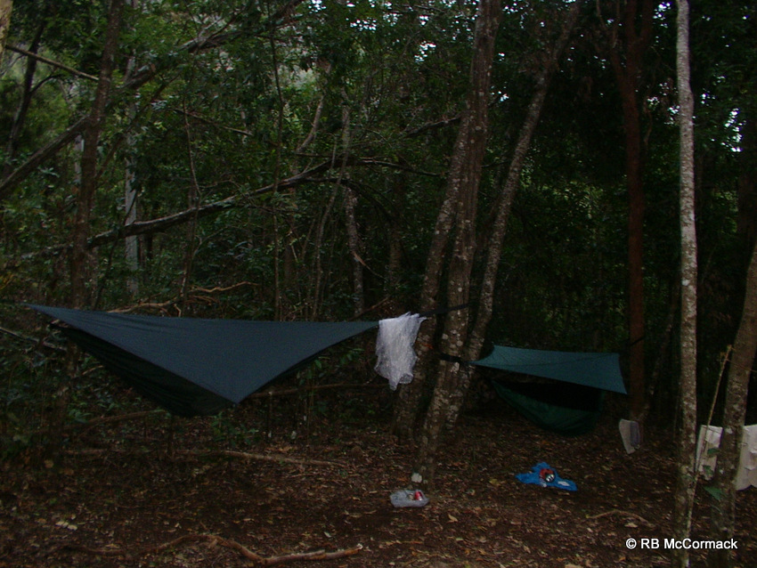 Hammock camping in the forest